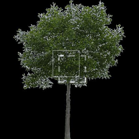 IE-classic-tree