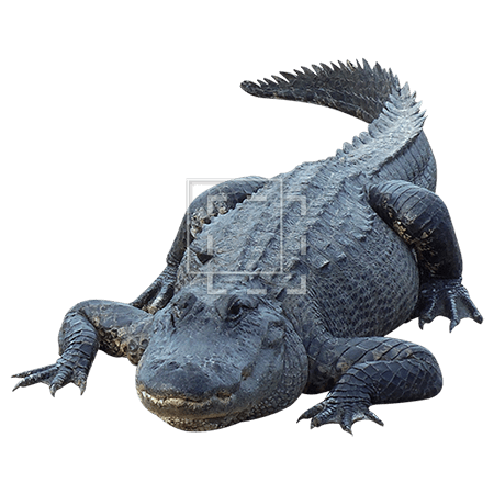 IE-in-your-face-alligator