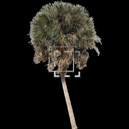 IE-palm-tree-providing-shade
