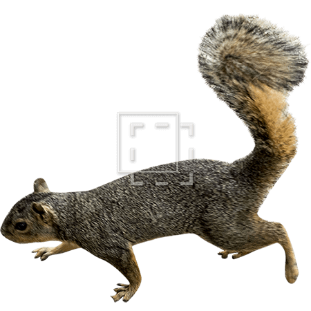 IE-squirrel-walking