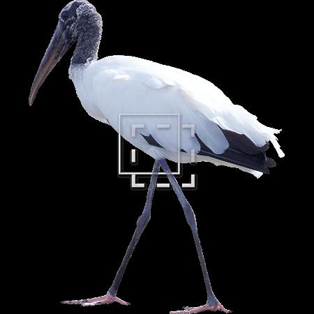 IE-white-bird-in-the-everglades