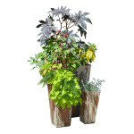 Plants in Tall Pots