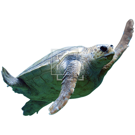 ie-sea-turtle