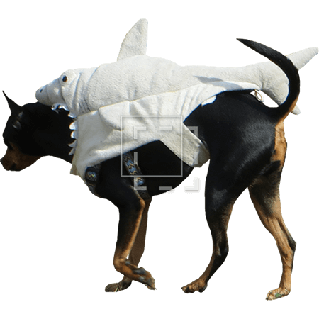 ie-shark-dog