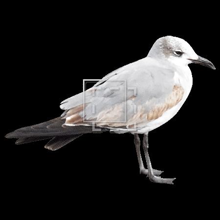 ie-ocean-bird
