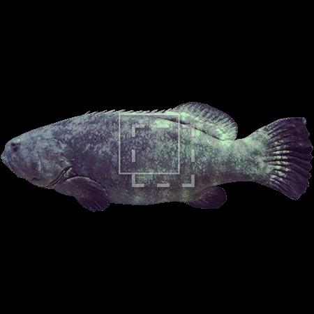 ie-fish