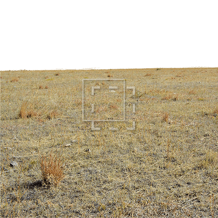 ie-harsh-southwest-grasses