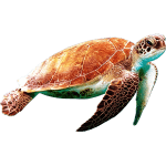 ie-orange-sea-turtle